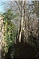 ST7361 : Footpath, Odd Down by Derek Harper