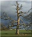 SN0113 : Dead Tree : Week 8
