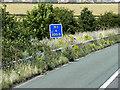 SE3008 : Motorway Verge near Kexbrough by David Dixon