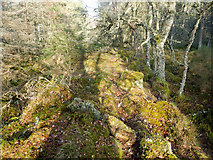 NH5853 : Line of bank through the Monadh Mor bog forest by Julian Paren