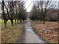 SD6313 : Bridleway near Rivington Castle by David Dixon