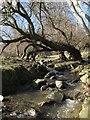SH8774 : Fallen tree by Jonathan Wilkins