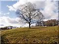SD8203 : Heaton Park Grazing Field by David Dixon
