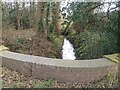 SJ7563 : Minor stream at Bradwall Green by Stephen Craven