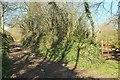 SX2764 : Footpath to Trewolland by Derek Harper