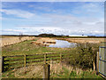 SD4214 : View North from the Ron Barker Hide at Martin Mere by David Dixon