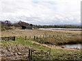 SD4214 : WWT Wetlands Centre, Martin Mere by David Dixon