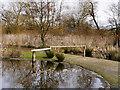 SD4214 : Wetland Centre, Martin Mere by David Dixon