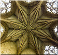 SK7053 : Chapter House ceiling, Southwell Minster : Week 16