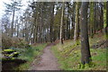 SX4551 : South West Coast Path, Mount Edgcumbe Park by N Chadwick