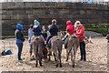 NZ8911 : Donkeys on West Beach, Whitby, Yorkshire : Week 17
