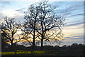 SJ7375 : Cheshire East : Grassy Field & Trees by Lewis Clarke