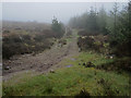 S6938 : Misty Forest Track by kevin higgins