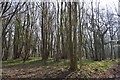TR1053 : Denge Wood by N Chadwick