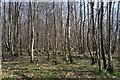 TR1052 : Denge Wood by N Chadwick