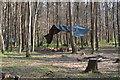 TR1052 : Tarpaulin shelter, Denge Wood by N Chadwick