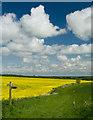 SE9254 : Bridleway junction near North Dalton by Paul Harrop