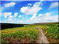 NZ8900 : Robin Hood's Bay Path ( Road ) by Scott Robinson