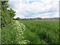 SP8007 : North Bucks Way east of Kimble Wick by Des Blenkinsopp