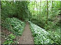 SJ9493 : Footpath through the woods at Pole Bank by Gerald England