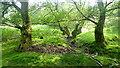 SO2831 : Shades of Green, 2 by Jonathan Billinger