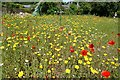 SW6031 : Godolphin House: The British wild flower bed by Michael Garlick