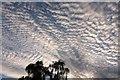 SX9065 : Mackerel sky over Torquay by Derek Harper