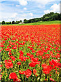 TA1103 : Poppy field near Audleby : Week 25