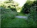 SJ8542 : Path on Ferndown LNR by Jonathan Hutchins