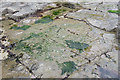NZ7818 : Jurassic Ripples by Anne Burgess
