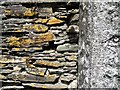SX4866 : Lichen on a dry stone wall by Ceri Thomas