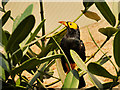 SJ4169 : Tropical Bird in Monsoon Forest at Chester Zoo by David Dixon