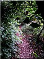 SZ1095 : Muscliff: an overgrown bit of footpath M17 by Chris Downer