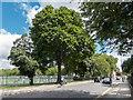 TQ2778 : Royal Hospital Road, Chelsea, London : Week 28