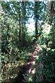 SP6328 : Footpath goes through the trees by Philip Jeffrey