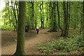 SJ6676 : In Big Wood by Peter Turner