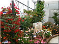 TQ4761 : Summer Flower Exhibition at Coolings by Marathon