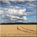 SP2855 : View towards Staple Hill Farm by David P Howard