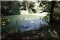 SE3005 : Pond in Silkstone Fall by Ian S