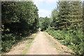 SJ5372 : Delamere Forest by Jeff Buck