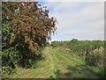 SP6010 : Oxfordshire Way near Menmarsh Guide Post by Des Blenkinsopp