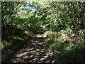 SP7836 : Alongside Beachampton Grove by Dave Thompson