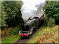 SD7915 : Flying Scotsman Approaching Brooksbottom Tunnel by David Dixon