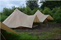 TQ5245 : Tents, Penshurst Park by N Chadwick