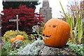 SO6625 : Pumpkin celebrations in Linton : Week 44