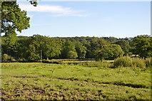 TQ3327 : South of River's Farm by N Chadwick