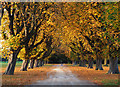 TA1131 : Autumnal Avenue : Week 44
