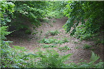 TQ5245 : Small disused quarry, Penshurst Park by N Chadwick