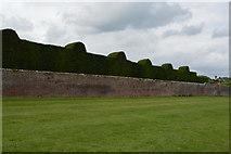 TQ5243 : Garden Wall, Penshurst Place by N Chadwick