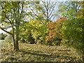 TQ2495 : Alongside the Dollis Brook in Totteridge Fields by Marathon